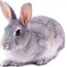 亚博亚博体育官网入口用青紫蓝兔
