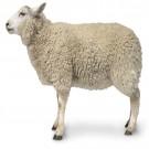 亚博亚博体育官网入口用绵羊