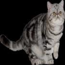 亚博亚博体育官网入口用猫